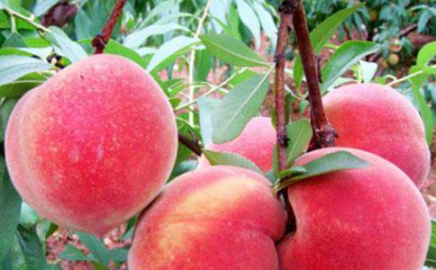 夏天吃桃子好