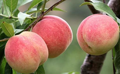 夏天吃什么桃子好