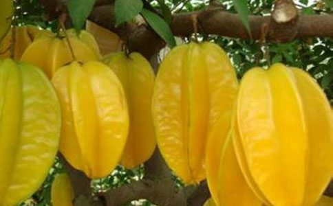 杨桃的营养